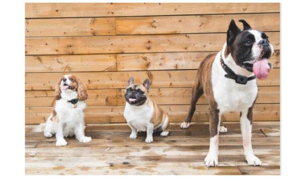 Louie Tracker 3 hunde